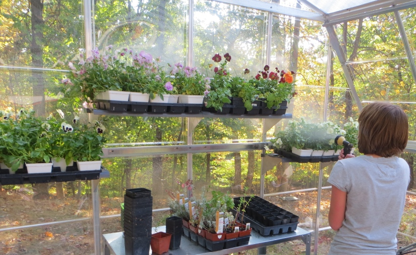 A student waters the plants inside the 4-season greenhouse