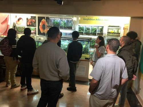 10th Scholars exploring the Amphibian Exhibit