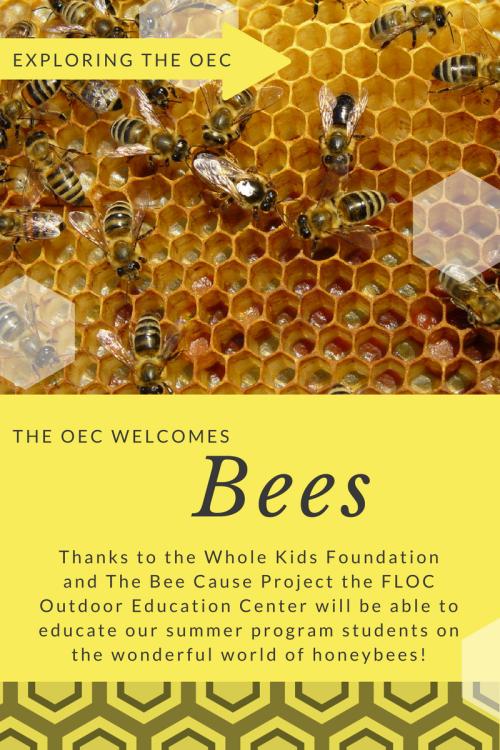 oec-blog-2-14-17-1